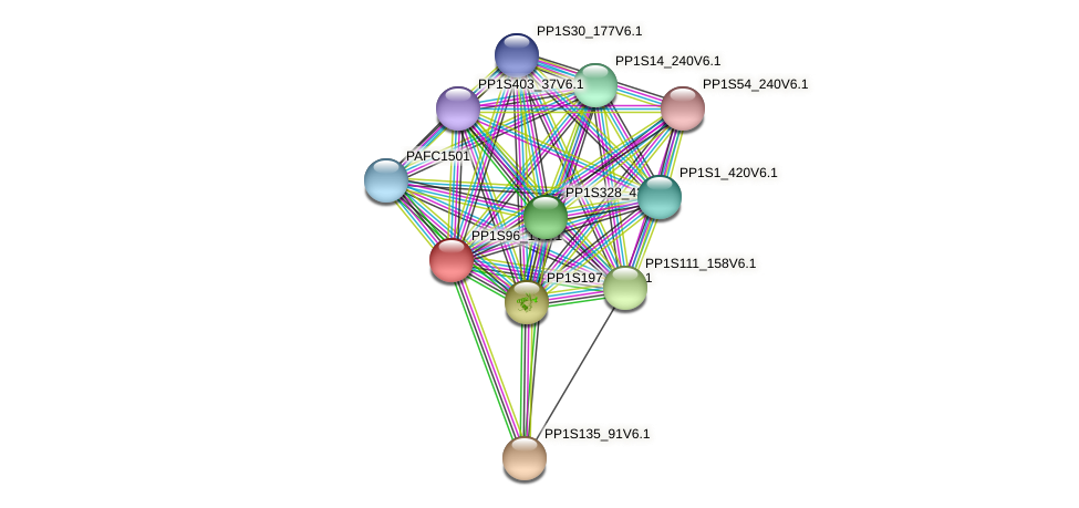 PP1S96_1V6.1 protein (Physcomitrella patens) - STRING interaction network