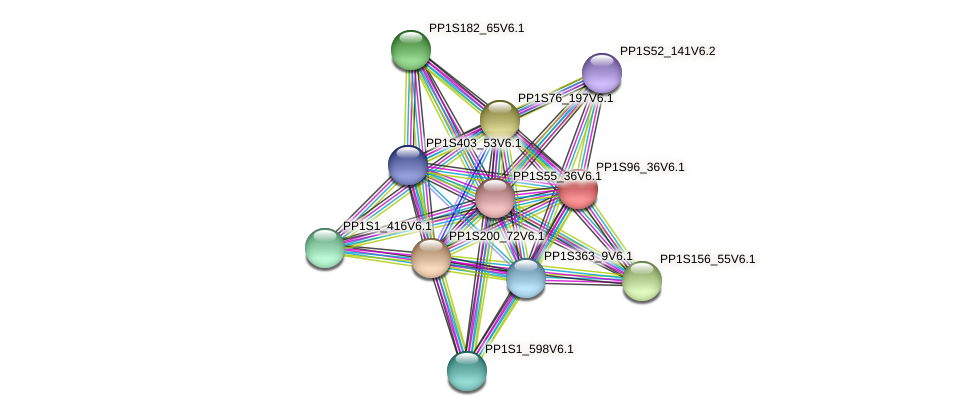 PP1S96_36V6.1 protein (Physcomitrella patens) - STRING interaction network