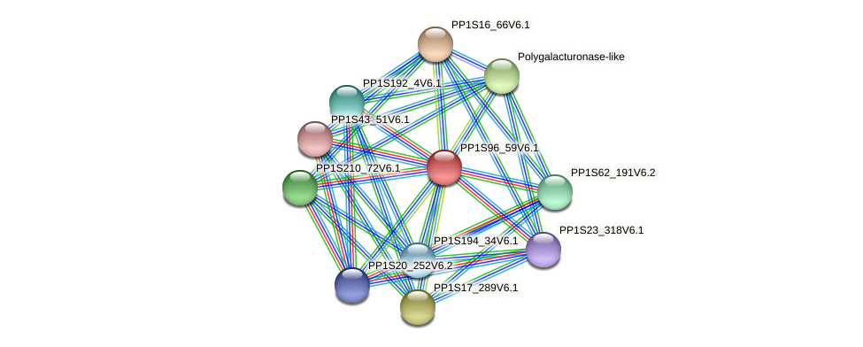 PP1S96_59V6.1 protein (Physcomitrella patens) - STRING interaction network