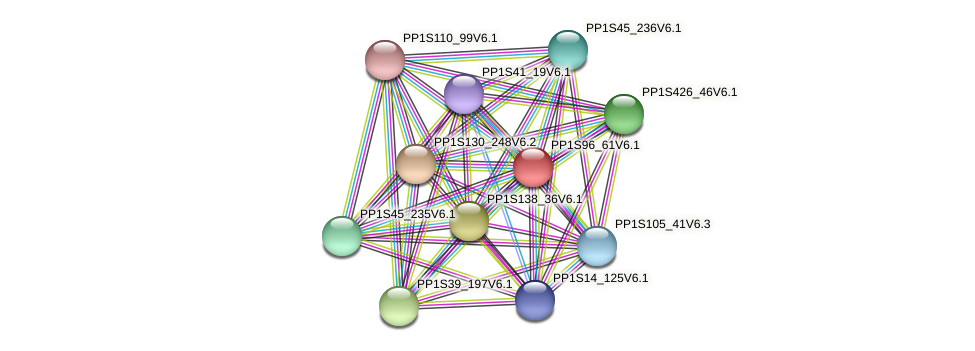 PP1S96_61V6.1 protein (Physcomitrella patens) - STRING interaction network