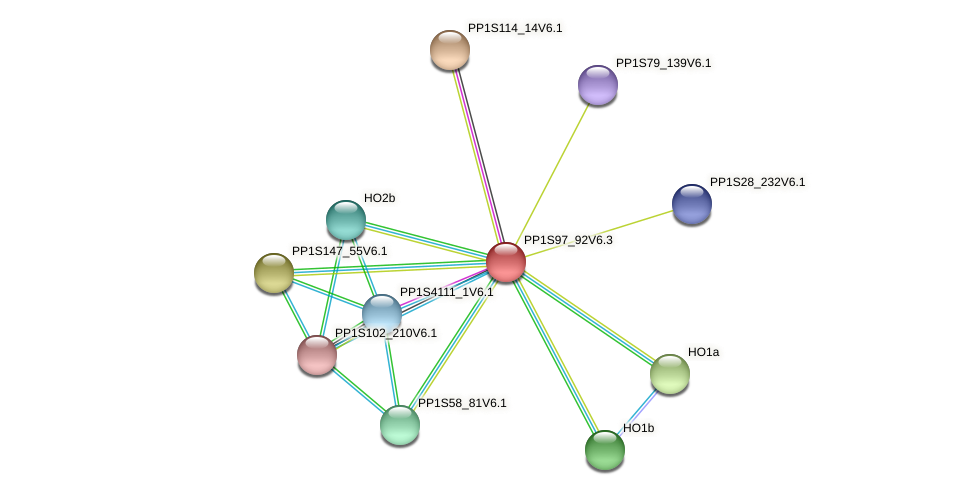 PP1S97_92V6.1 protein (Physcomitrella patens) - STRING interaction network