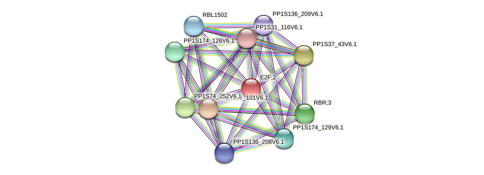 PP1S97_96V6.1 protein (Physcomitrella patens) - STRING interaction network