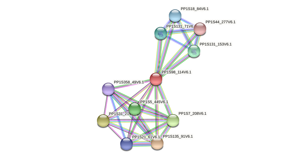 PP1S98_114V6.1 protein (Physcomitrella patens) - STRING interaction network
