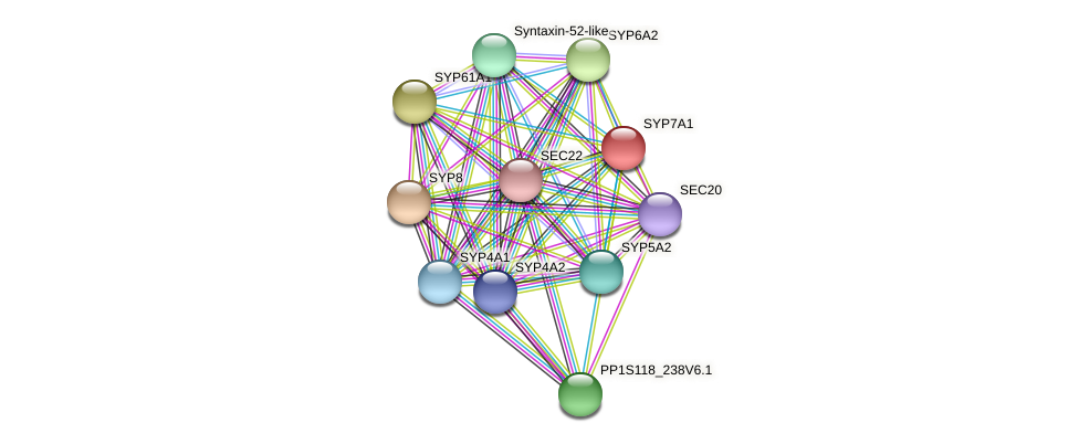 SYP7A1 protein (Physcomitrella patens) - STRING interaction network