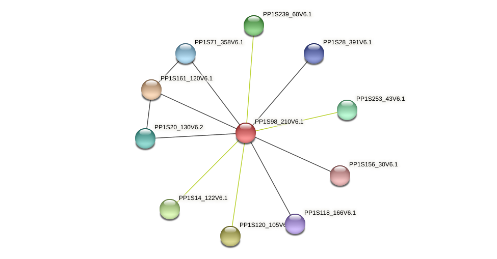 PP1S98_210V6.1 protein (Physcomitrella patens) - STRING interaction network