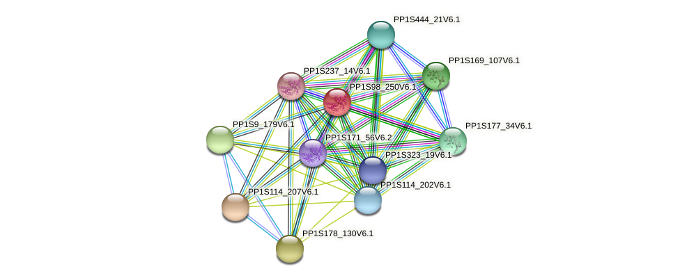PP1S98_250V6.1 protein (Physcomitrella patens) - STRING interaction network