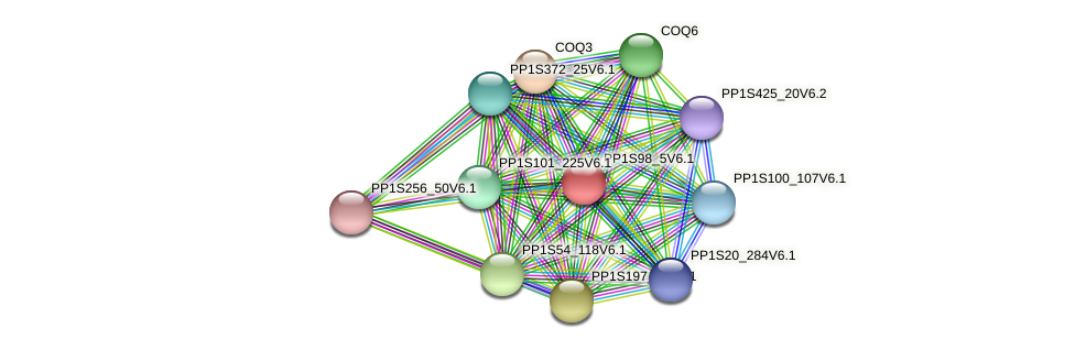 PP1S98_5V6.1 protein (Physcomitrella patens) - STRING interaction network