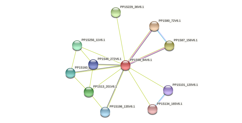 PP1S98_84V6.1 protein (Physcomitrella patens) - STRING interaction network