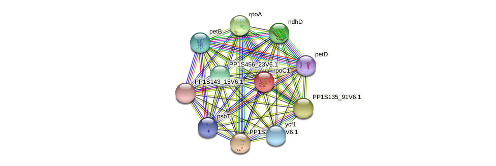 rpoC1 protein (Physcomitrella patens) - STRING interaction network