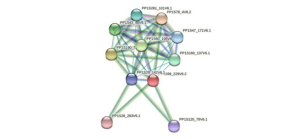 PP1S99_229V6.1 protein (Physcomitrella patens) - STRING interaction network