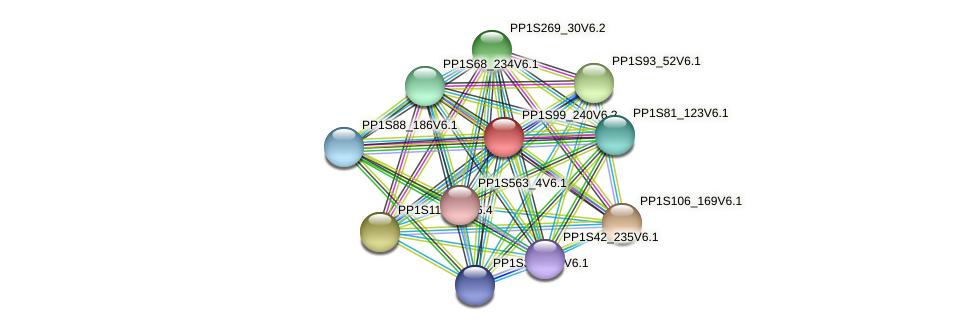 PP1S99_240V6.1 protein (Physcomitrella patens) - STRING interaction network