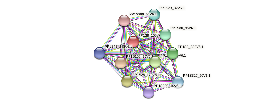 PP1S9_158V6.1 protein (Physcomitrella patens) - STRING interaction network