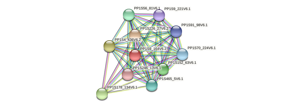 PP1S9_164V6.2 protein (Physcomitrella patens) - STRING interaction network