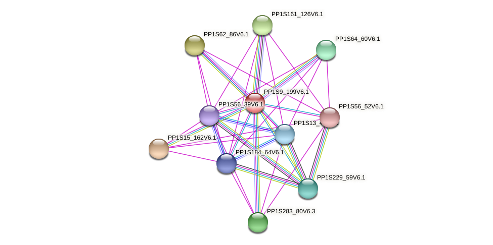 PP1S9_199V6.1 protein (Physcomitrella patens) - STRING interaction network