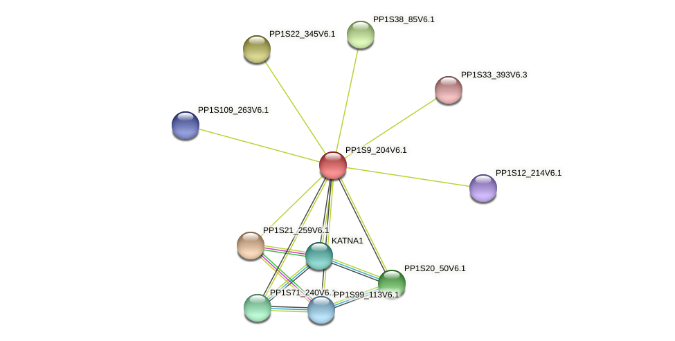 PP1S9_204V6.1 protein (Physcomitrella patens) - STRING interaction network