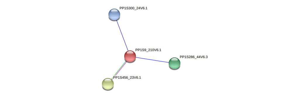 PP1S9_210V6.1 protein (Physcomitrella patens) - STRING interaction network