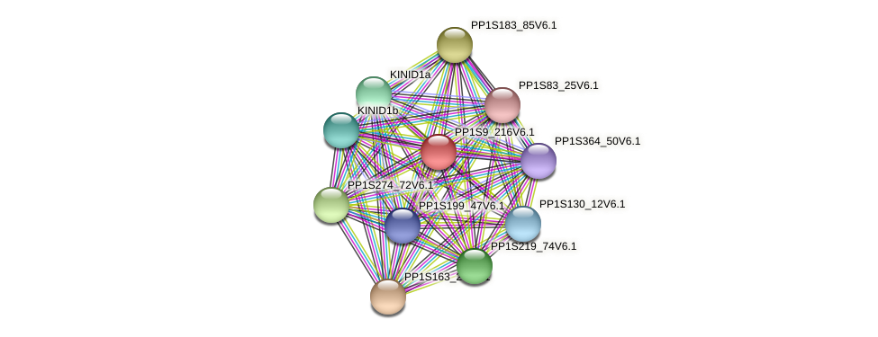 PP1S9_216V6.1 protein (Physcomitrella patens) - STRING interaction network