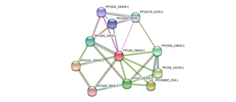 PP1S9_238V6.1 protein (Physcomitrella patens) - STRING interaction network