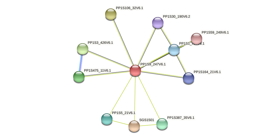 PP1S9_247V6.1 protein (Physcomitrella patens) - STRING interaction network