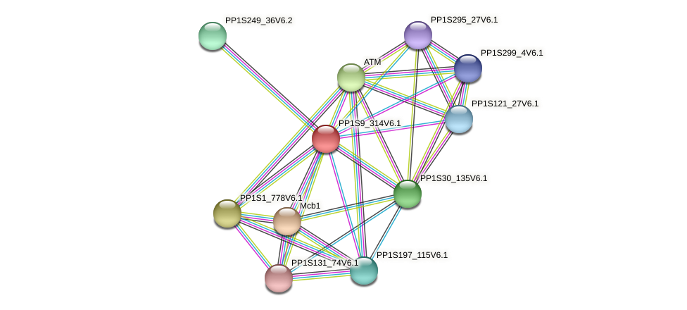 PP1S9_314V6.1 protein (Physcomitrella patens) - STRING interaction network