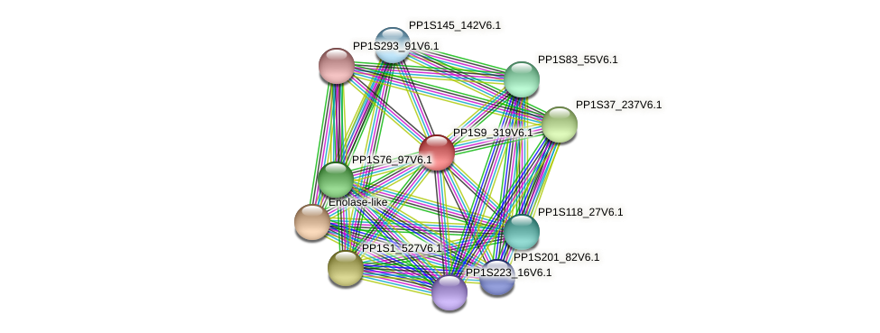 PP1S9_319V6.1 protein (Physcomitrella patens) - STRING interaction network