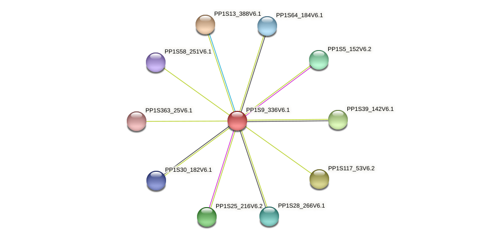 PP1S9_336V6.1 protein (Physcomitrella patens) - STRING interaction network