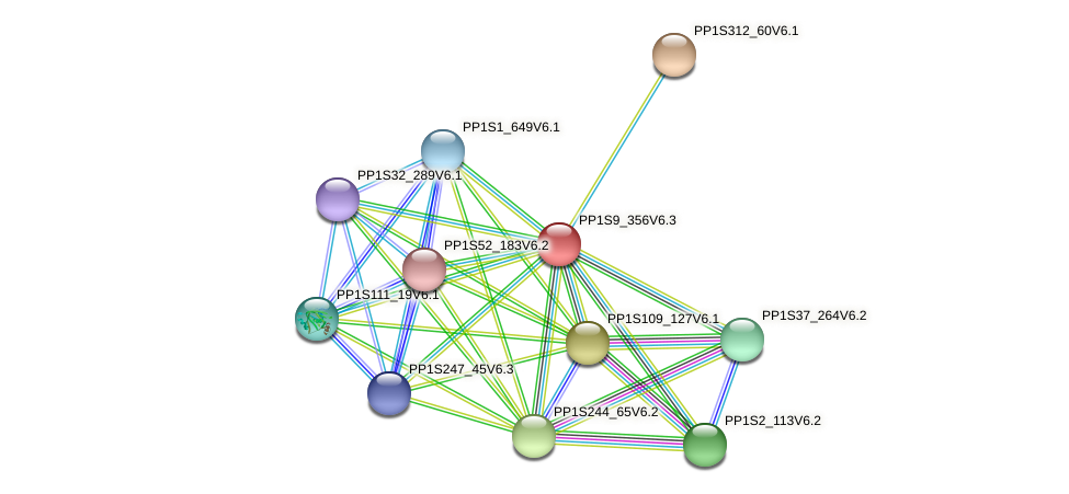 PP1S9_356V6.1 protein (Physcomitrella patens) - STRING interaction network