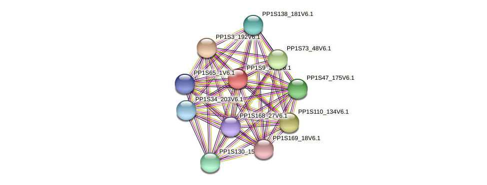PP1S9_370V6.1 protein (Physcomitrella patens) - STRING interaction network