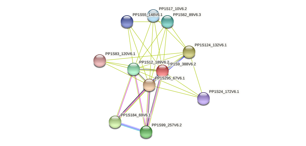 PP1S9_388V6.1 protein (Physcomitrella patens) - STRING interaction network