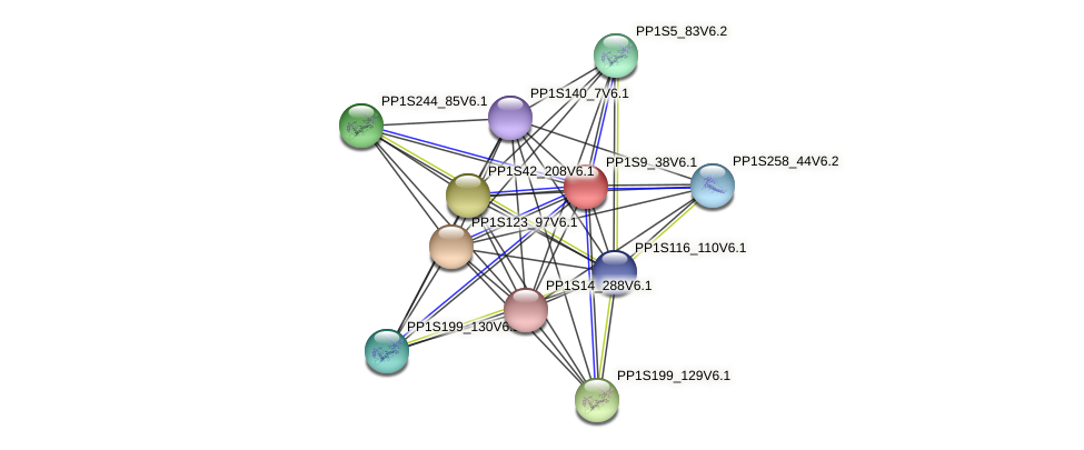 PP1S9_38V6.1 protein (Physcomitrella patens) - STRING interaction network