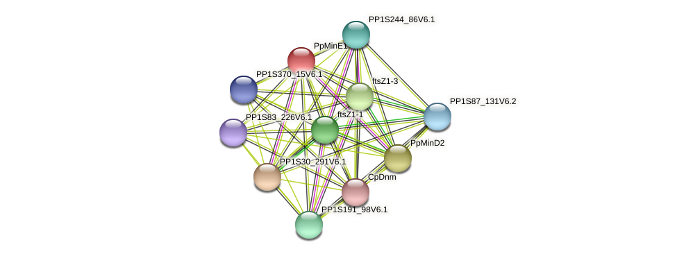 PP1S9_40V6.1 protein (Physcomitrella patens) - STRING interaction network