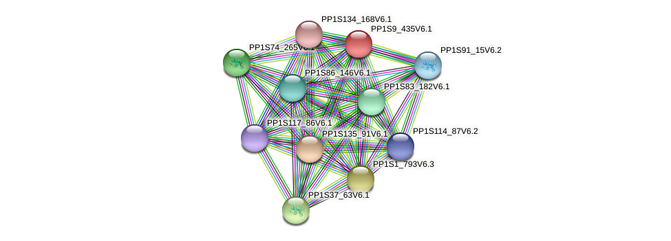 PP1S9_435V6.1 protein (Physcomitrella patens) - STRING interaction network