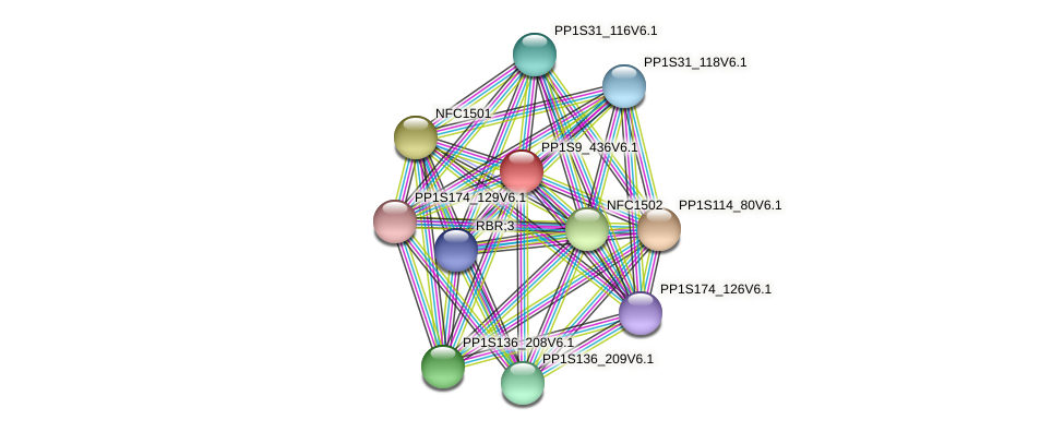 PP1S9_436V6.1 protein (Physcomitrella patens) - STRING interaction network