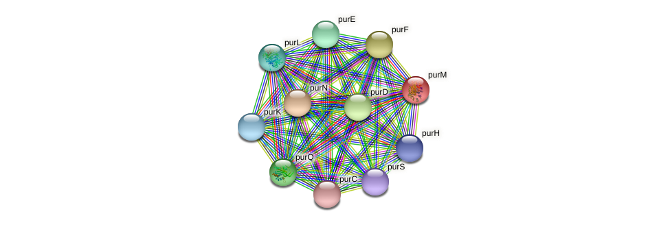 purM protein (Nitrobacter hamburgensis) - STRING interaction network