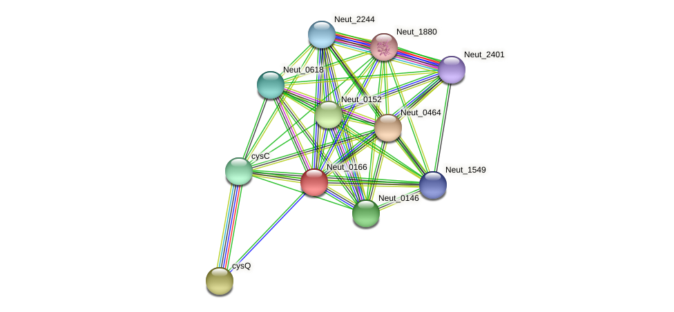 Neut_0166 protein (Nitrosomonas eutropha) - STRING interaction network