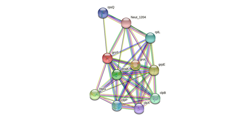 groS protein (Nitrosomonas eutropha) - STRING interaction network