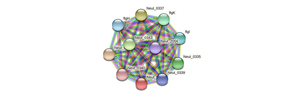Neut_0338 protein (Nitrosomonas eutropha) - STRING interaction network