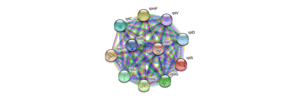 rplS protein (Nitrosomonas eutropha) - STRING interaction network
