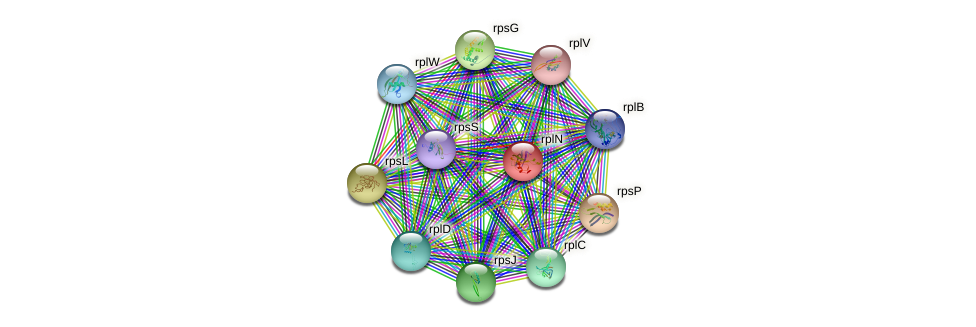 rplN protein (Nitrosomonas eutropha) - STRING interaction network