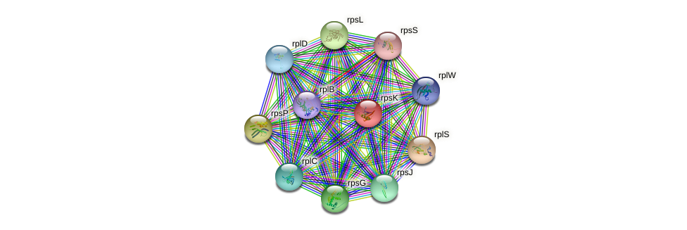 rpsK protein (Nitrosomonas eutropha) - STRING interaction network