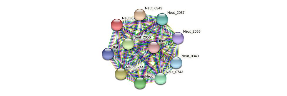 Neut_0745 protein (Nitrosomonas eutropha) - STRING interaction network