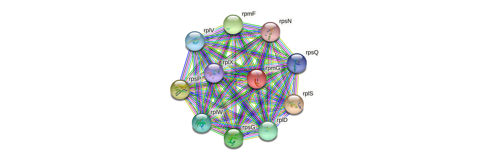 rpmG protein (Nitrosomonas eutropha) - STRING interaction network