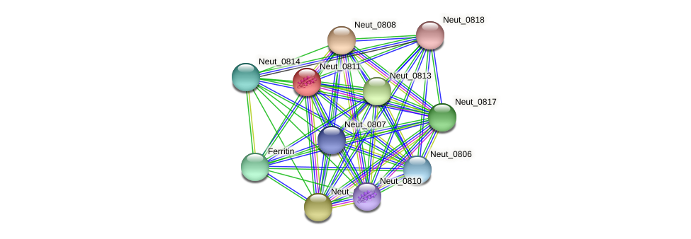 Neut_0811 protein (Nitrosomonas eutropha) - STRING interaction network