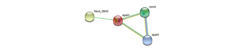 apaG protein (Nitrosomonas eutropha) - STRING interaction network