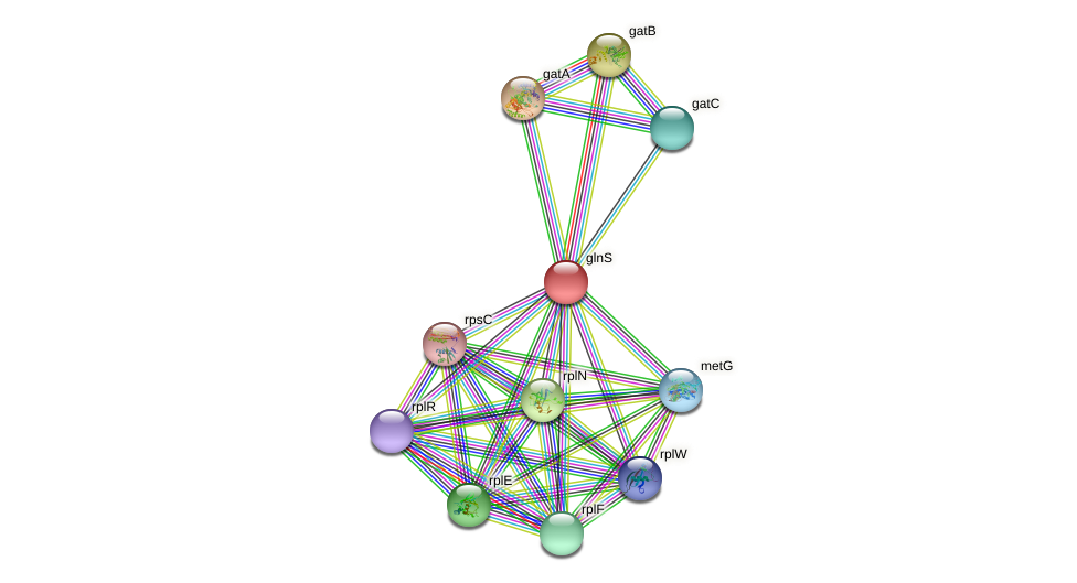 glnS protein (Nitrosomonas eutropha) - STRING interaction network