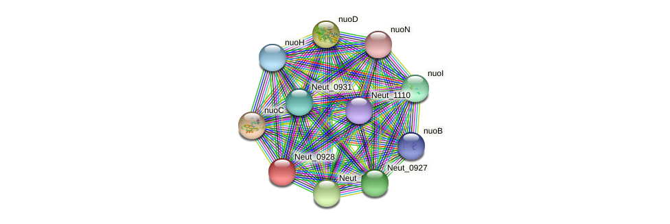 Neut_0928 protein (Nitrosomonas eutropha) - STRING interaction network