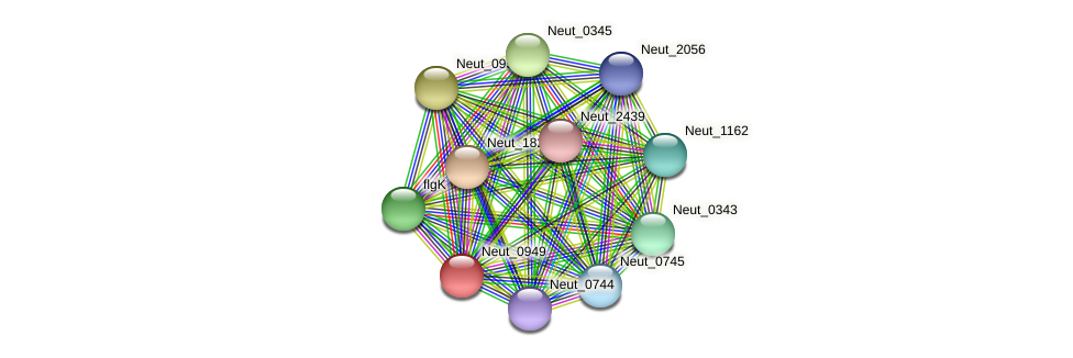 Neut_0949 protein (Nitrosomonas eutropha) - STRING interaction network