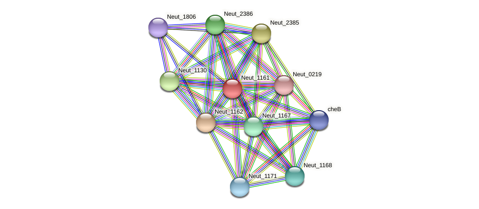 Neut_1161 protein (Nitrosomonas eutropha) - STRING interaction network