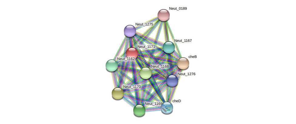 Neut_1171 protein (Nitrosomonas eutropha) - STRING interaction network