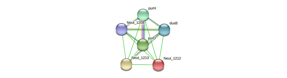 Neut_1212 protein (Nitrosomonas eutropha) - STRING interaction network